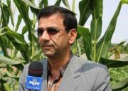 مدیر جهاد کشاورزی قائمشهر اعلام کرد: توزیع ۴۵۰ تن مرغ در قائمشهر